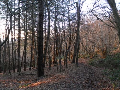 Late sunlight through trees