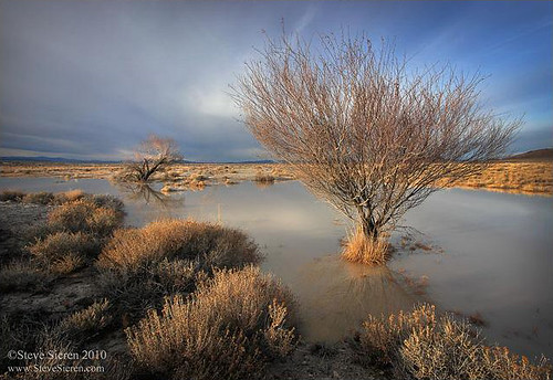 Death Valley Trees and Flood