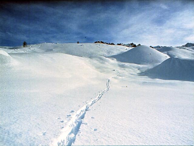 snow &  traces