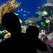 23/365 Aquarium silhouette