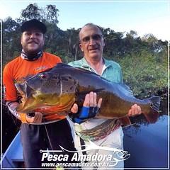 A temporada Amazonica começou e os tucunares vão dando as boas vindas ao pescar. Foto de um açú do Rio Negro no barco hotel Demeni Sport Fishing.  #pescaamadora #pescaesportiva #pescaria #pesqueesolte #tucunareaçu #tucunare #tucuna #rionegro #amazonia #fi