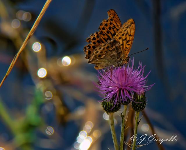 Mariposa,florecillas y agua