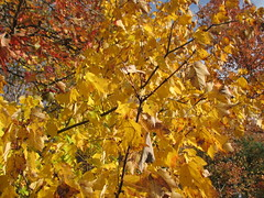 Autumn colors Walnut Creek Lake Raleigh NC 0511