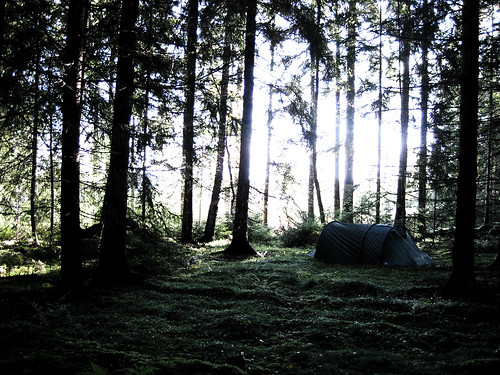 camping woods solitude tent