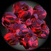 Deep Pink Space Roses by ☺♥ julev69 ♥☺ 725,000+ views ~THANK YOU!!!