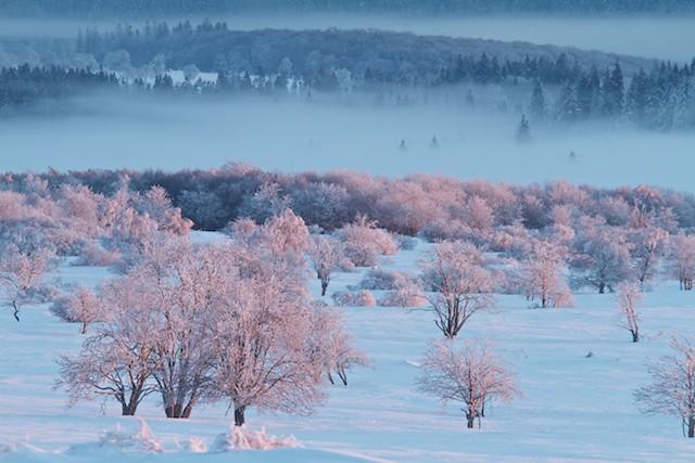 Winter in de Hoge Venen (Gert Arijs)