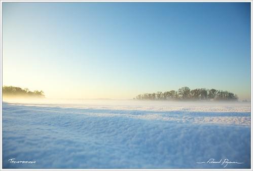 cielsky paysagelandscape canonef24105mmf4lisusm neigesnow canoneos5dmarkii couleurcolor floraflore aubedawn brumemist forêtforest leverdusoleildaybreaksunrise