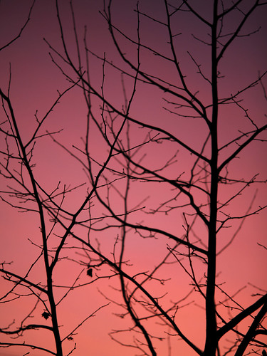 red sky at night, sailor's delight.
