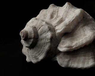 (22/365) Seashell