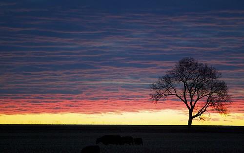 sunrise potd aphotoaday