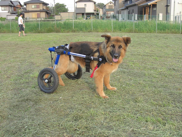 Dog Wheelchair That They Can Lay Down