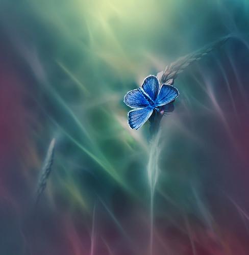 Queen of Flowers..