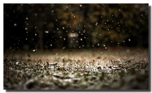 La prima Neve [The first snow]