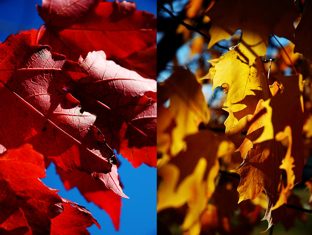 The leaves linger yet