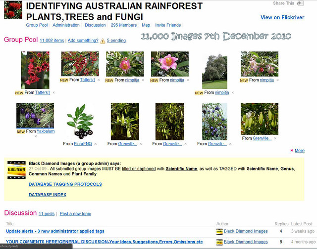 Rainforest Plants Names Rainforest Plants List