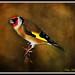 Incredible birds pics !(10)