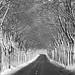 winter wonderland! by Marleen R.