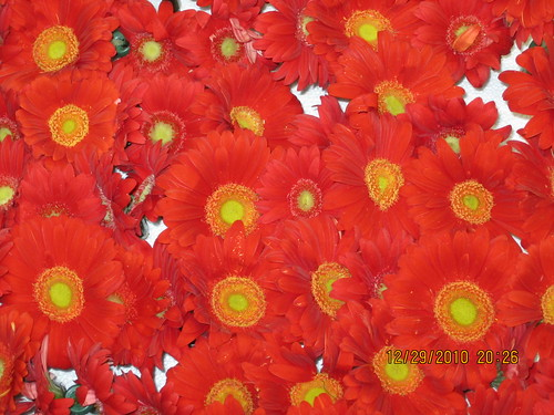 Red Flowers 2011 Rose Parade