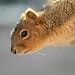 Nuts? by jaxxon