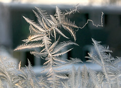 Ice Crystals & Winter