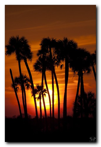 sunset wild sun nature beautiful outdoors florida hiking nwr lakewoodruff lakewoodruffnwr scotthelfrichphotographycom