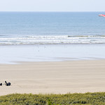 Kite Surfer on Cefn Sidan Beach at Pembrey Country Park, South Wales