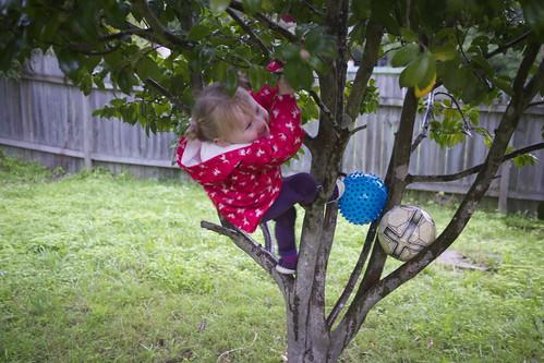 Climbing the dreaming tree