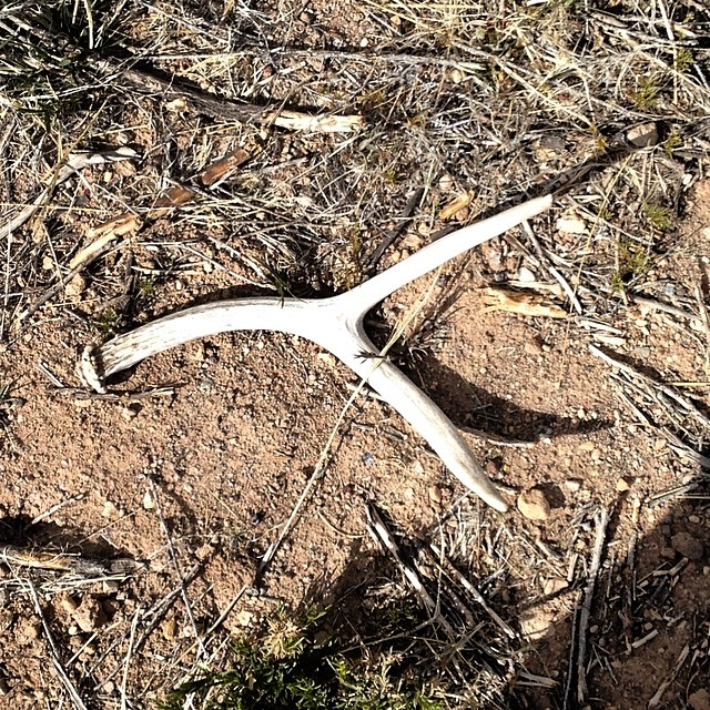 Great day for road finds #antler #roadfind more later