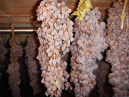 Tuscany Vin Santo (holy wine) home made, the sweet wine to drink with Cantuccini biscuits.