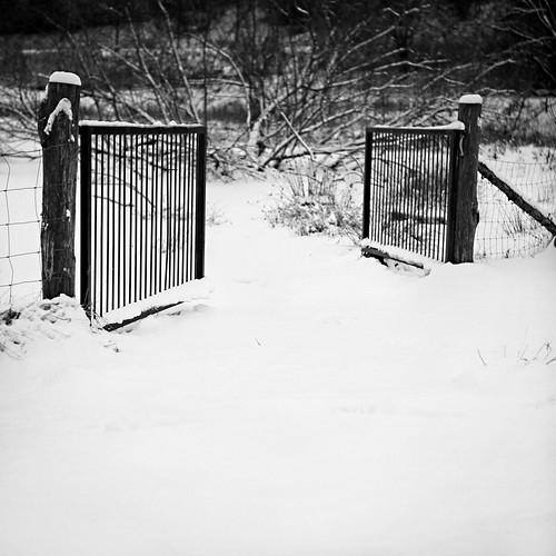 winter bw snow monochrome denmark vinter gate fencing danmark 2010 kolding låge project365 ådalen 347365 december2010 indhegning canoneos5dmrkii alpedalen project36612010 131210 fårefold koldingådal 3472010