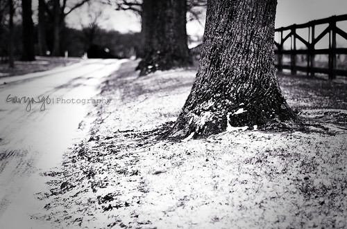 winter bw snow tree 50mm nikon dof f14 maryland monotone explore d7000