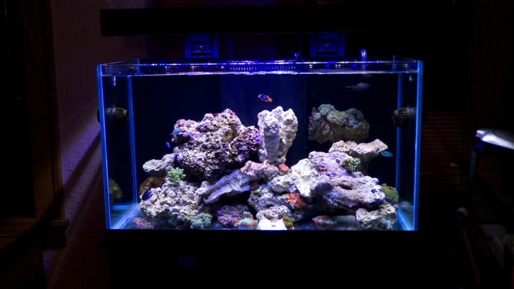 Oceanic Aquarium