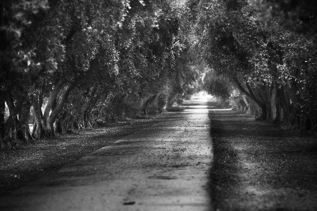 La vieille Europe a encore des ressources. Suivez la voie des oliviers...