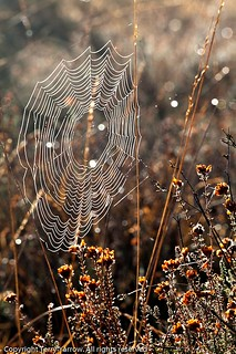 Winter Web