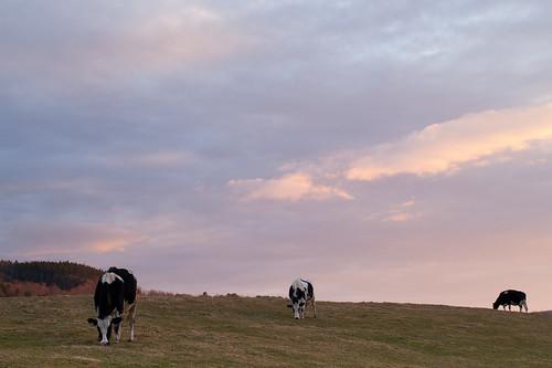 animals barnsfarms