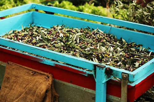Olives for Sifting