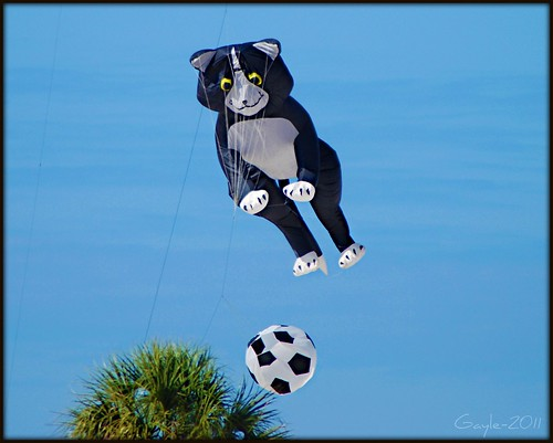 Not So High Flying Kittie...a 3 Photo Series