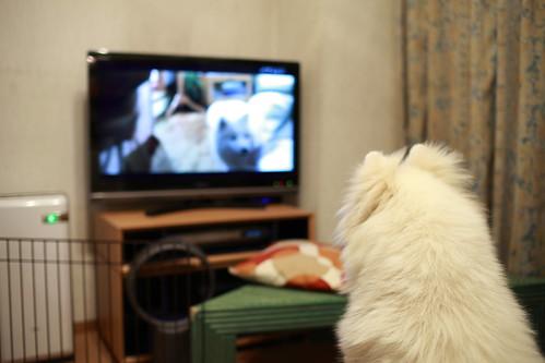 犬飼さんちの犬を見る犬