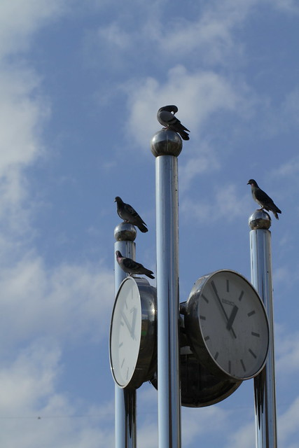 Photo:Pigeons and clocks - 鳩時計 By Takashi(aes256)