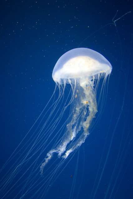 Image Result For National Aquarium Baltimore