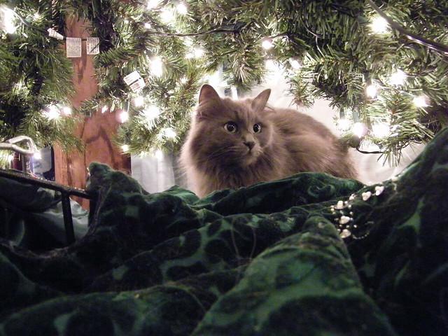173/365/903 (December 1, 2010) - Wanda under the Christmas Tree