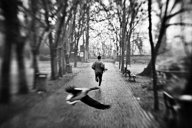 Legnano, parco - The Decisive Moment in Photography