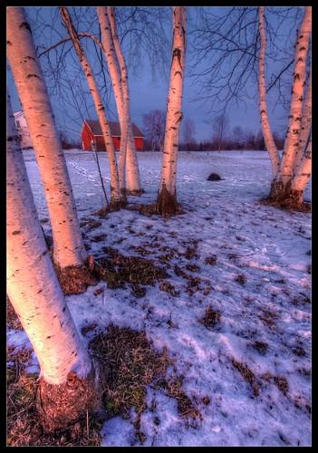 trees sunset snow tree nature flickr vermont outdoor wideangle birch vt birches northhero efs1022mmf3545usm borderfx hdrphotomatix116