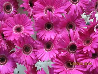 Purple Flowers, Rose Parade 2011