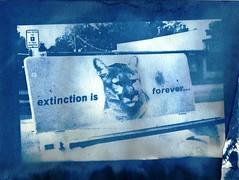 Extinction, 2006