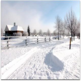 SNOW- NEIGE