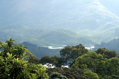View of Green Forest in Munnar