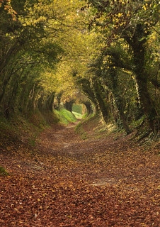 Footpath to Halnaker Mill, West Sussex.