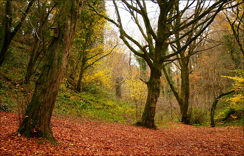 Autumn Near Ebbor Gorge