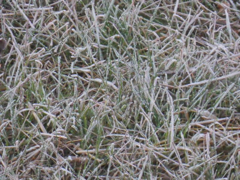 jardineros en acci n cuidados del c sped en invierno